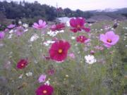 20071013PA0_0148.jpg