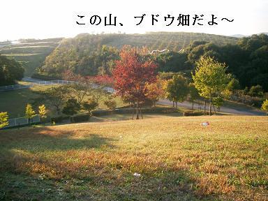 20071104100658.jpg