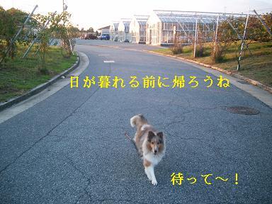 20071104101454.jpg