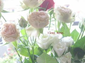糸島のバラ