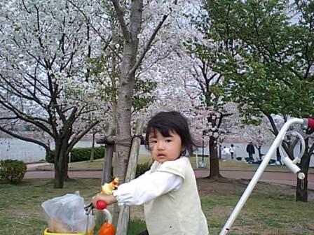 そろそろ桜散っちゃうかな。。。