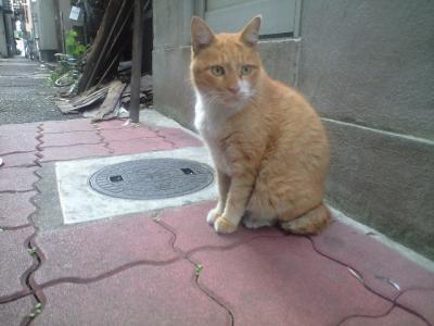 路地裏の猫1