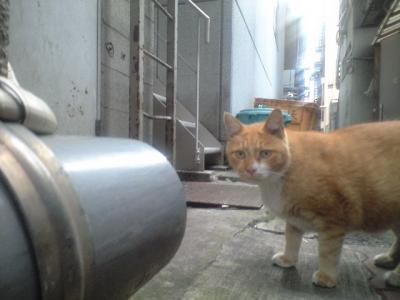 路地裏の猫2