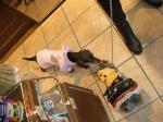 スリードッグベーカリーの看板犬ちゃんとご挨拶しているアイリスちゃん