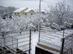 雪積もったよ