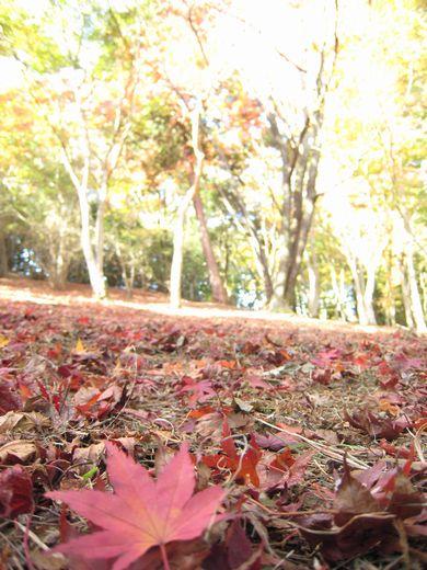 修善寺--もみじ林。