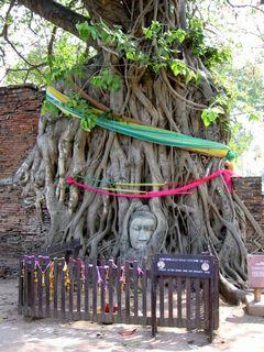 タイ アユタヤ遺跡--ワットプラマハタートの大仏さま。