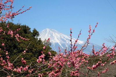 猛風吹き荒れる中、富士市の岩本山へと、梅を見に行ってきました。