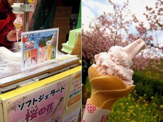 東伊豆の河津へと、満開の河津桜を見に行って来ました。