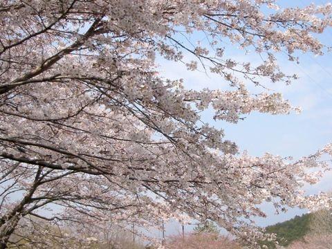 富士市--岩本山公園。