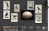 鳥のビオソフィア-山階コレクションへの誘い