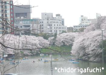 20080331chidori1.jpg