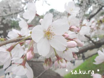 20080331chidori2.jpg