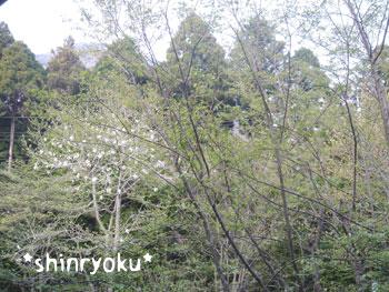 20080502oheya2.jpg