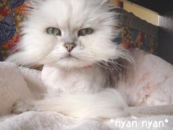 20080514nyannyan.jpg