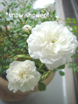 20080606snow-shower.jpg