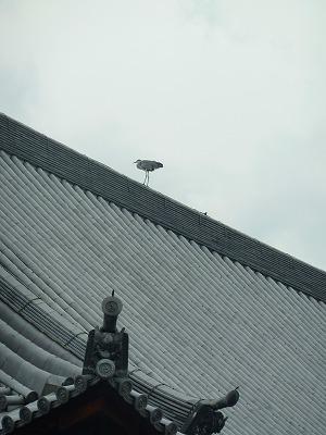 京都ソウコク寺044