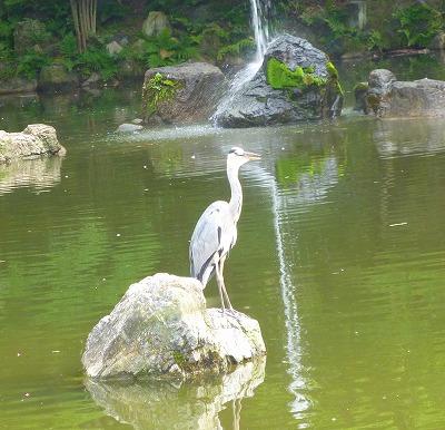 京都祇園四条057.JPG縮小
