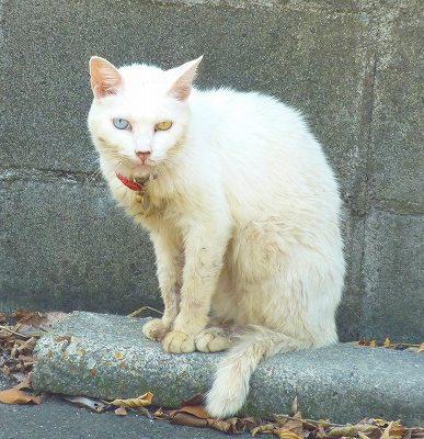 万福寺066.JP猫