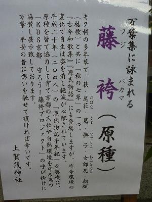 上賀茂030