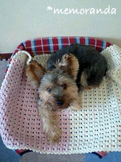 愛犬用ベッドスプレッド