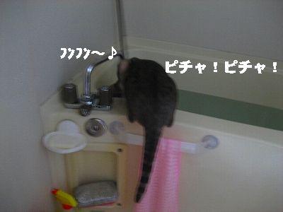 IMG_3322-1.jpg