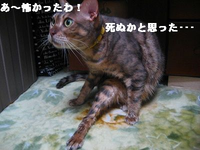 IMG_3382-1.jpg