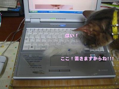 IMG_3655-1.jpg