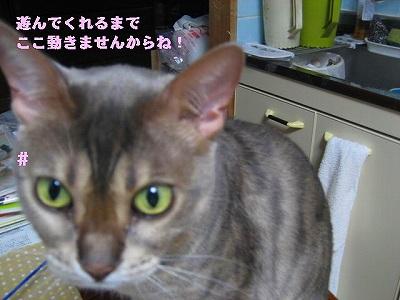 IMG_3660-1.jpg