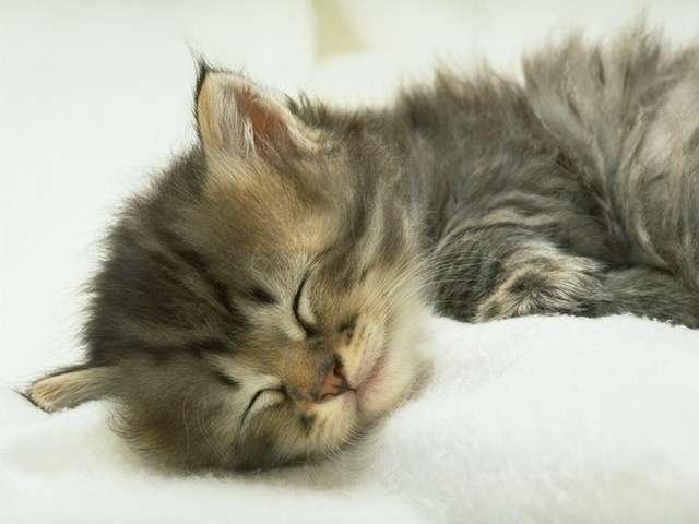 kitten101.jpg