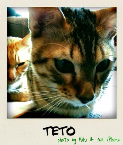 teto2