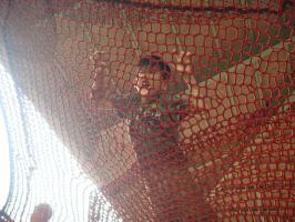 クモの巣ネット