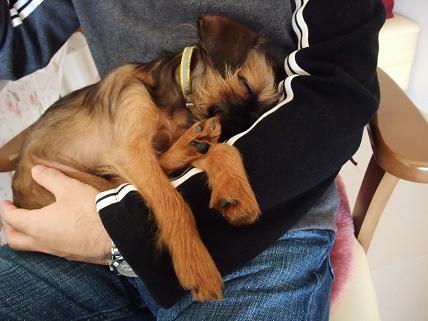 抱かれて眠る