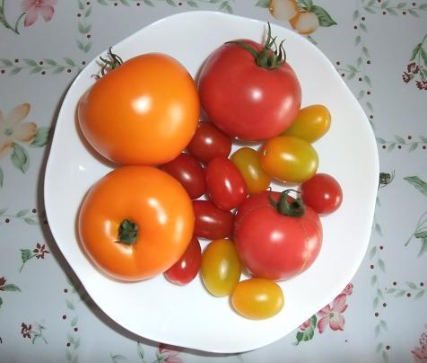 収穫:ルネサンス(キャロル以外の5種類)