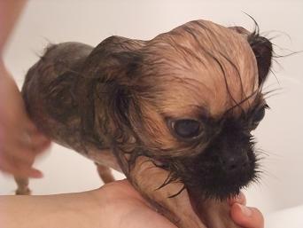 チャコ風呂