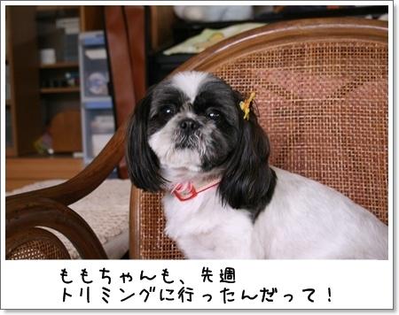 2008_0810_124226AA.jpg