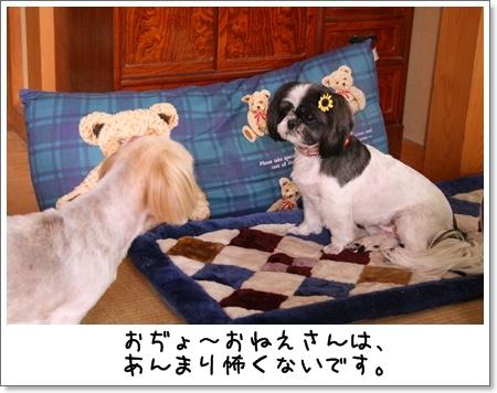2008_0810_124744AA.jpg