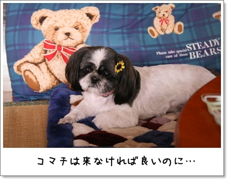 2008_0810_124852AA.jpg
