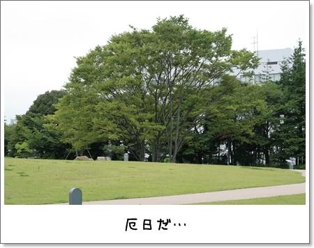 2008_0824_153052AA.jpg