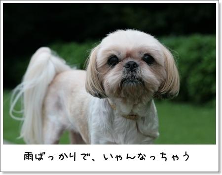 2008_0824_163436AB.jpg