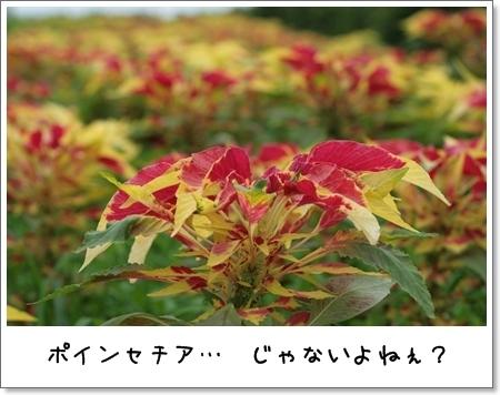 2008_0824_163745AB.jpg