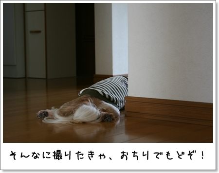 2008_0831_113000AA.jpg