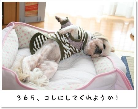 2008_0831_130536AA.jpg