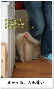 2009_0301_125412AA.jpg