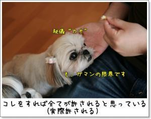 2009_0307_133132AA.jpg