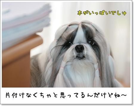 2009_0317_073955AA.jpg