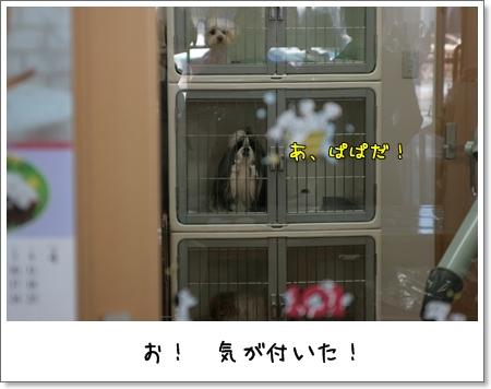2009_0320_143940AA.jpg