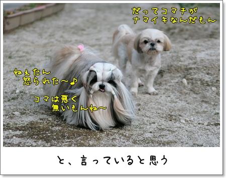 2009_0321_164324AA.jpg