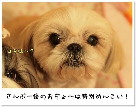 2009_0328_180709AA.jpg