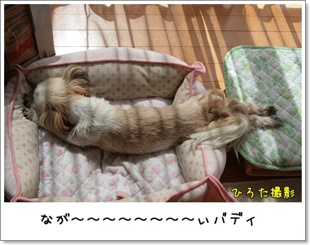 2009_0329_123113AA.jpg